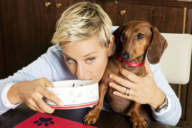 ellen-degeneres-petsmart-collection
